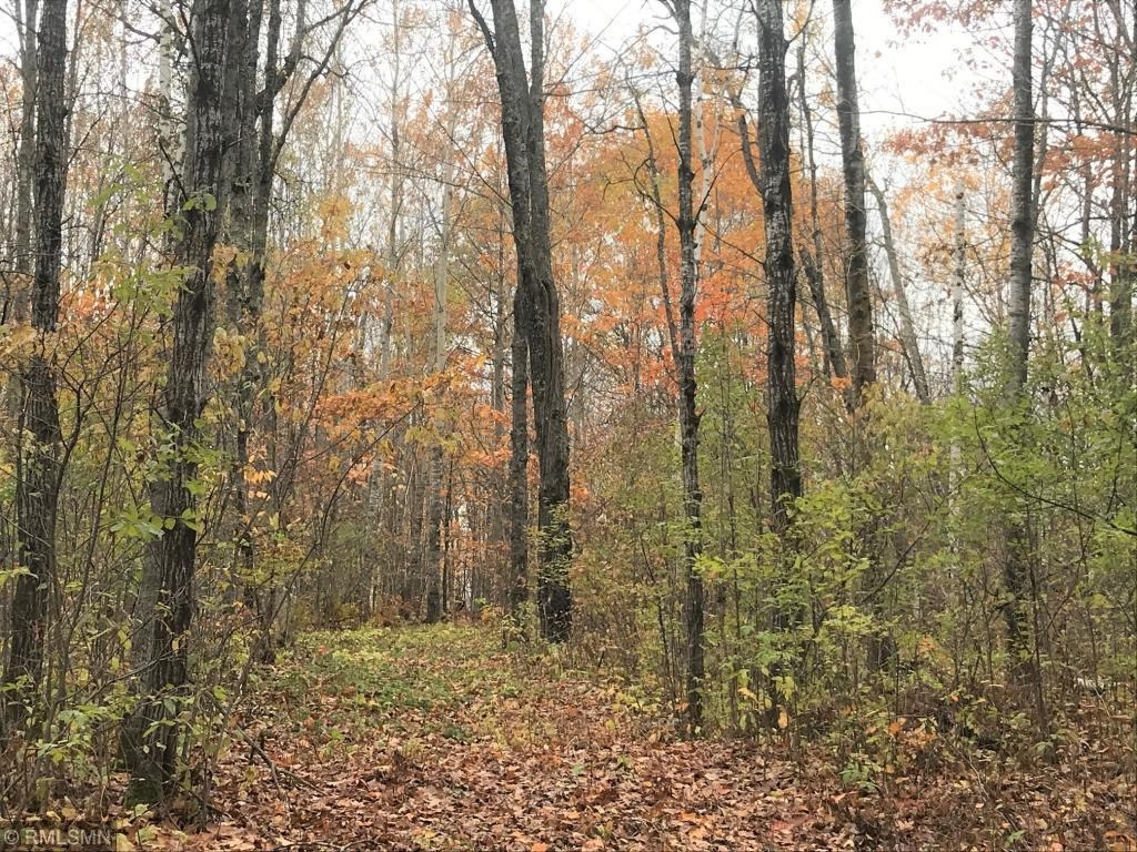 Wooded Hunting Acreage for sale in Northern Minnesota