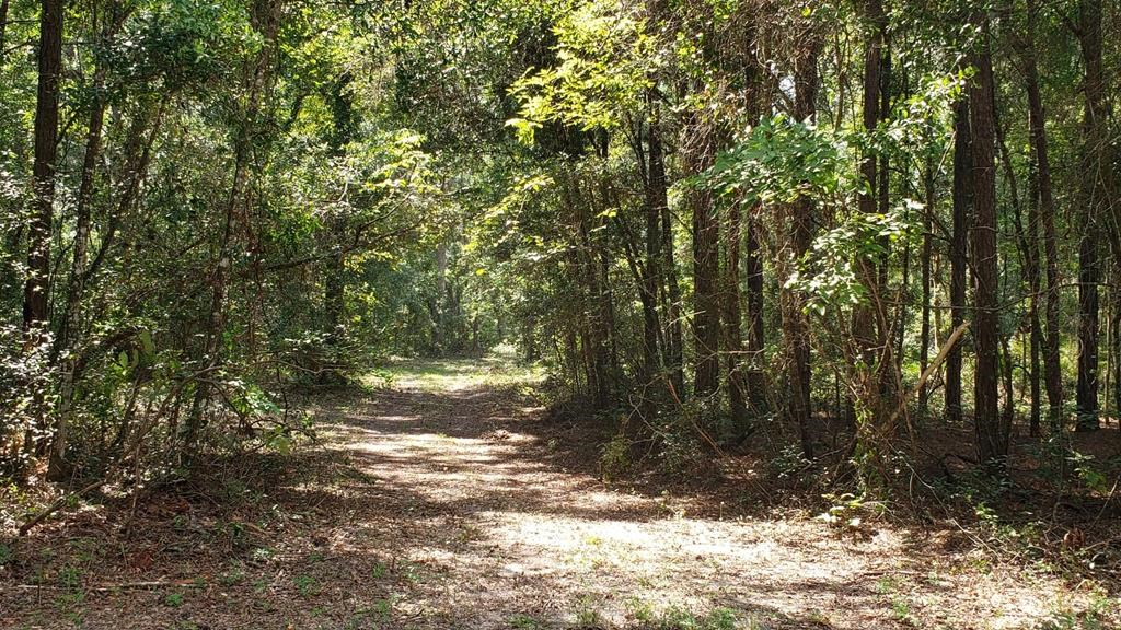 LAND FOR SALE DIXIE COUNTY FLORIDA