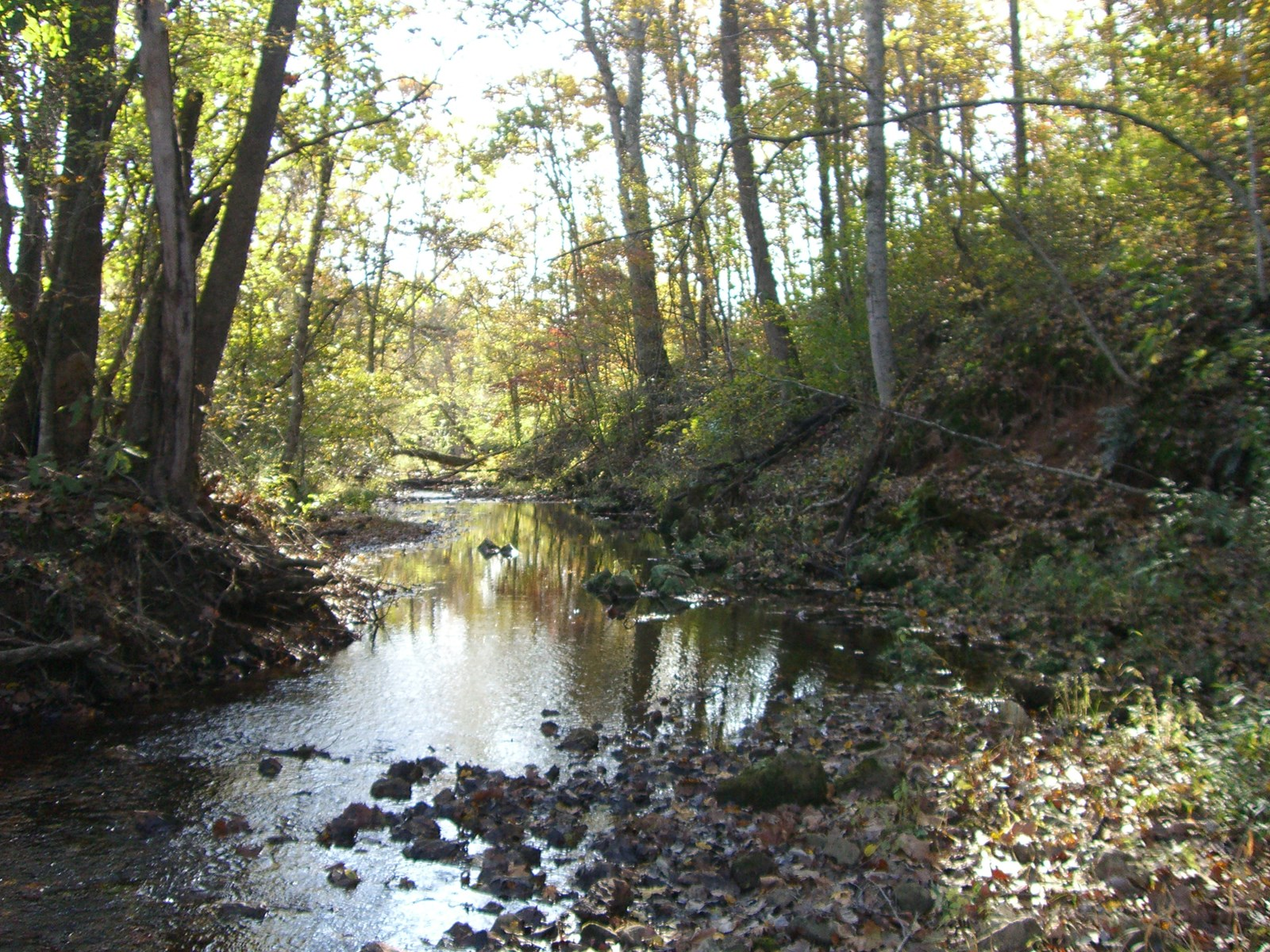 56 acres of prime Ozarks hunting property