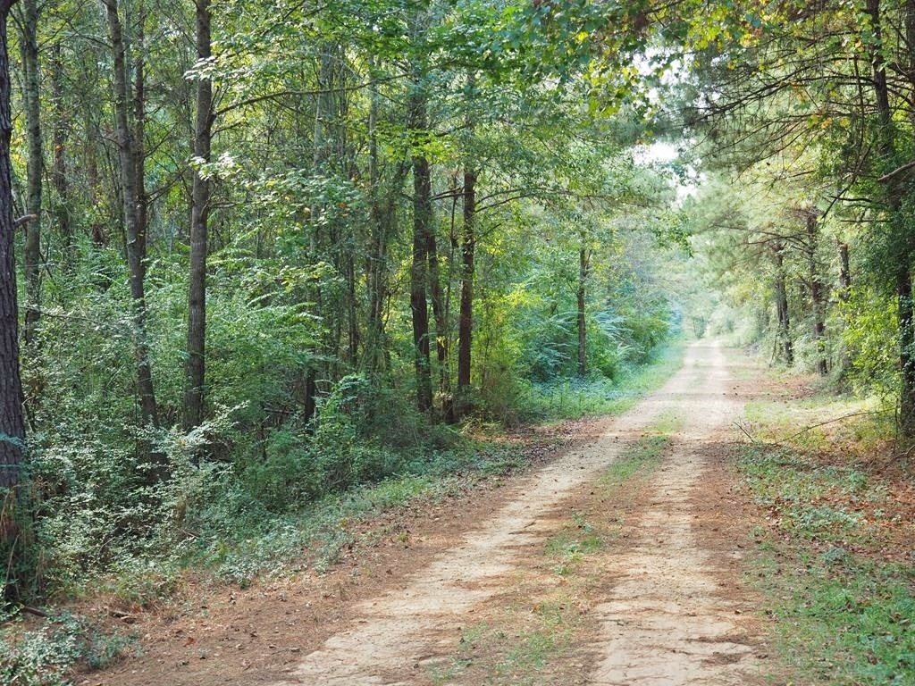 106 Acres Hunting Timber Land for Sale Jefferson Davis Co MS