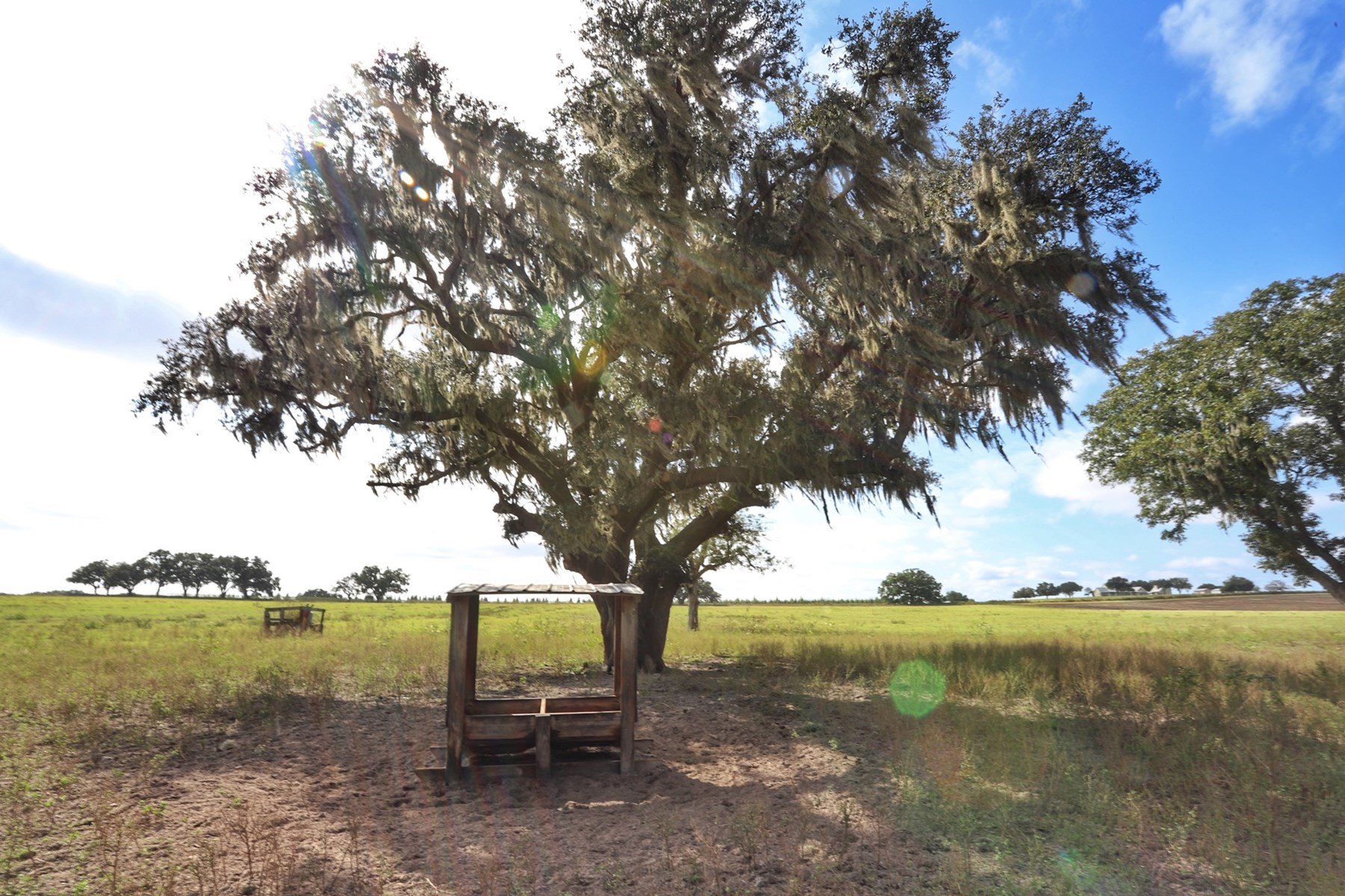 HORSE FARM OR RANCH FOR SALE NEAR OCALA FL