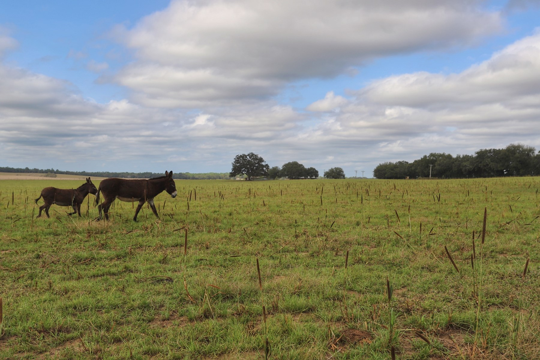 HORSE/CATTLE FARM LOCATED 15 MILES FROM OCALA