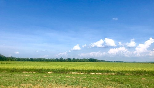 143+/- Irrigated Acres of Farm Land Just South of PB, MO