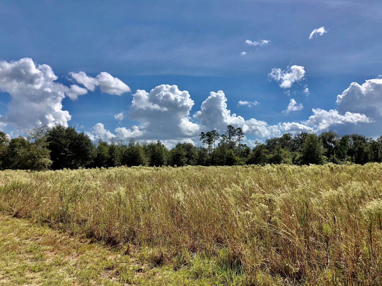 Land for Sale Near Gainesville, FL!  28 VACANT ACRE TRACT