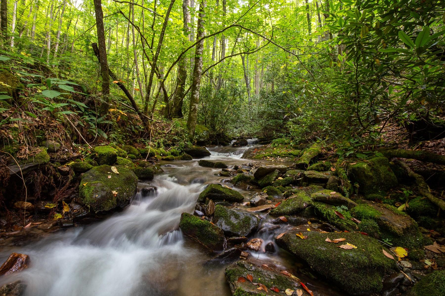 Dark Ridge Creek - 1100 Acres with 3 Miles of Trout Stream