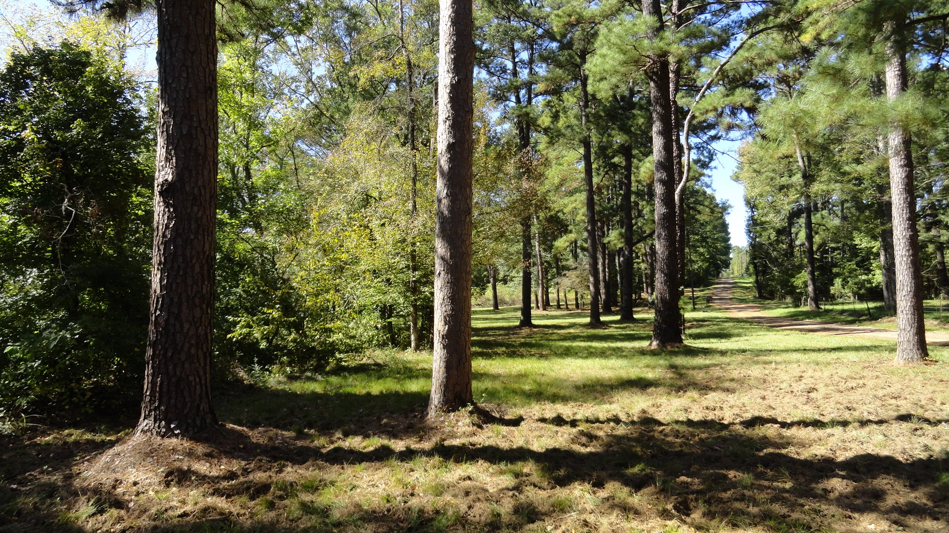 Rural East Texas Recreational, Hunting, Land for Sale