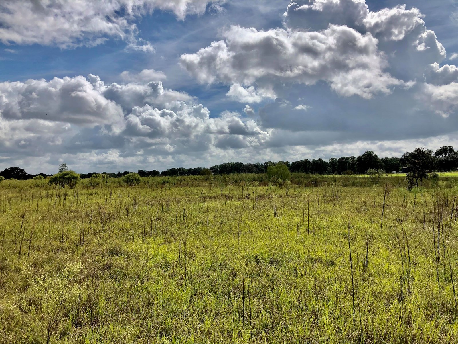 VACANT LAND FOR SALE in Gilchrist County, Trenton, FL