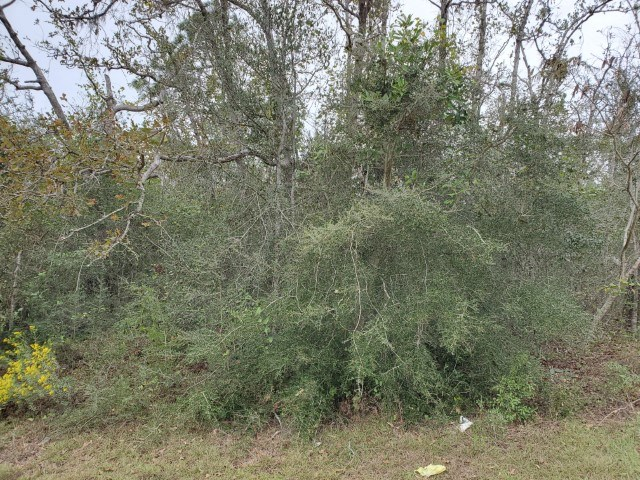 Remote country lot in Florida for sale