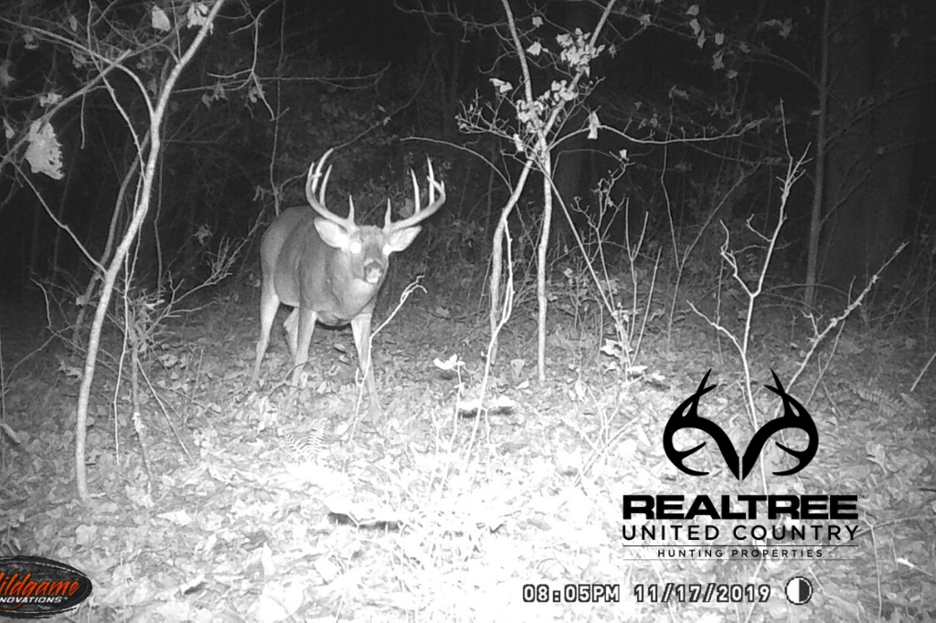 Timber investment land plus outstanding whitetail hunting