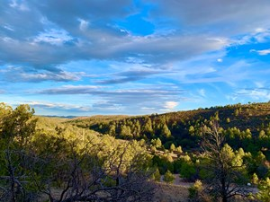HUNTING LAND BORDERING NATIONAL FOREST NEW MEXICO