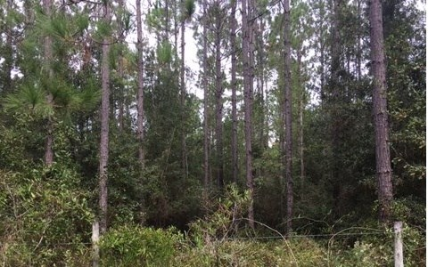 5 acres just minutes from town with paved road frontage.