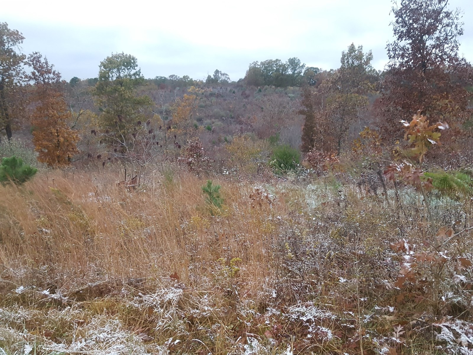 Land for Sale in the South Central Missouri Ozarks