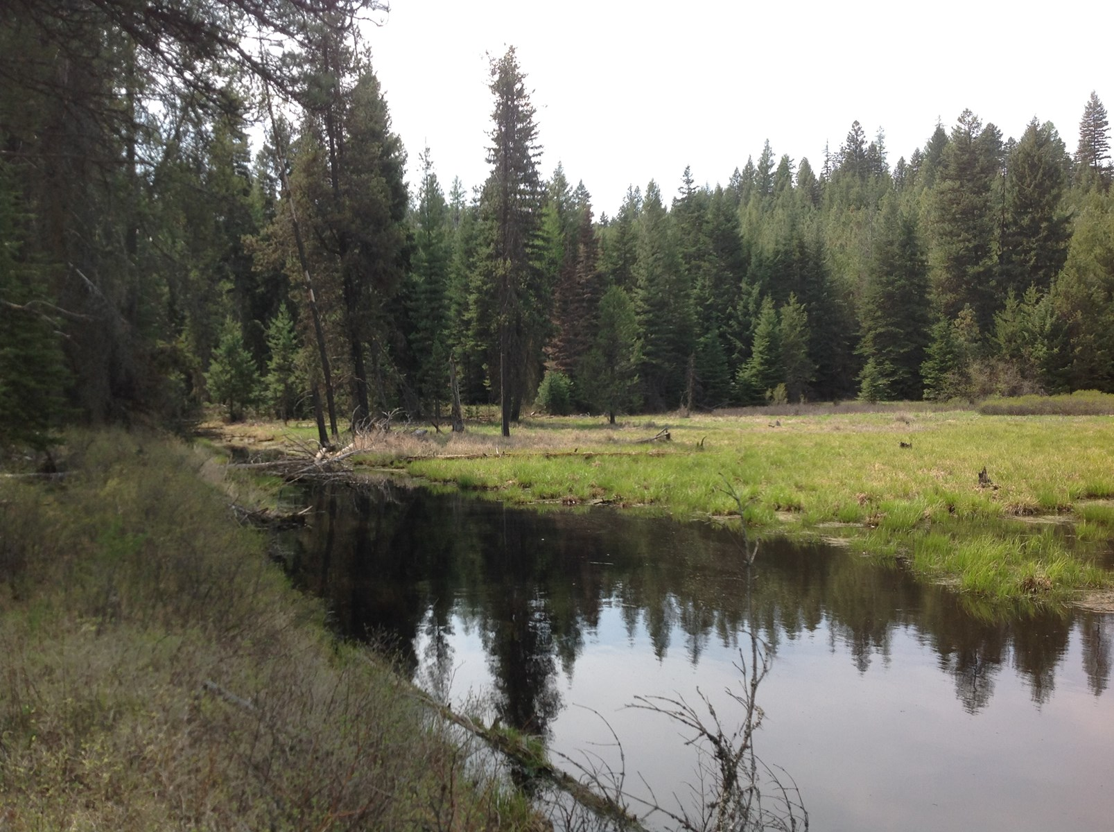 1,234 Acre Recreational Tract with Flat Creek