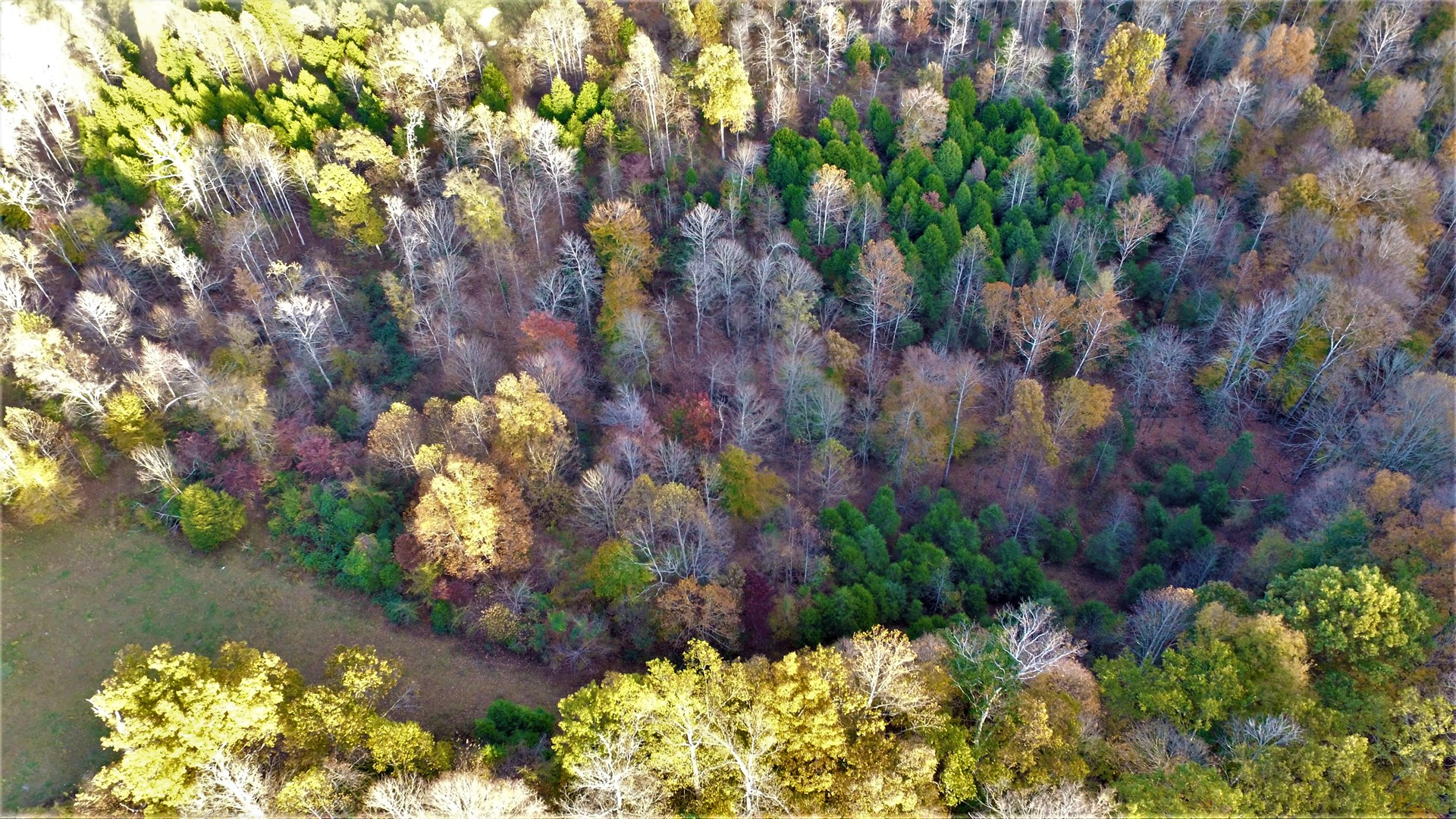95 1/2 Acres Metcalfe County, House, Hunting Paradise