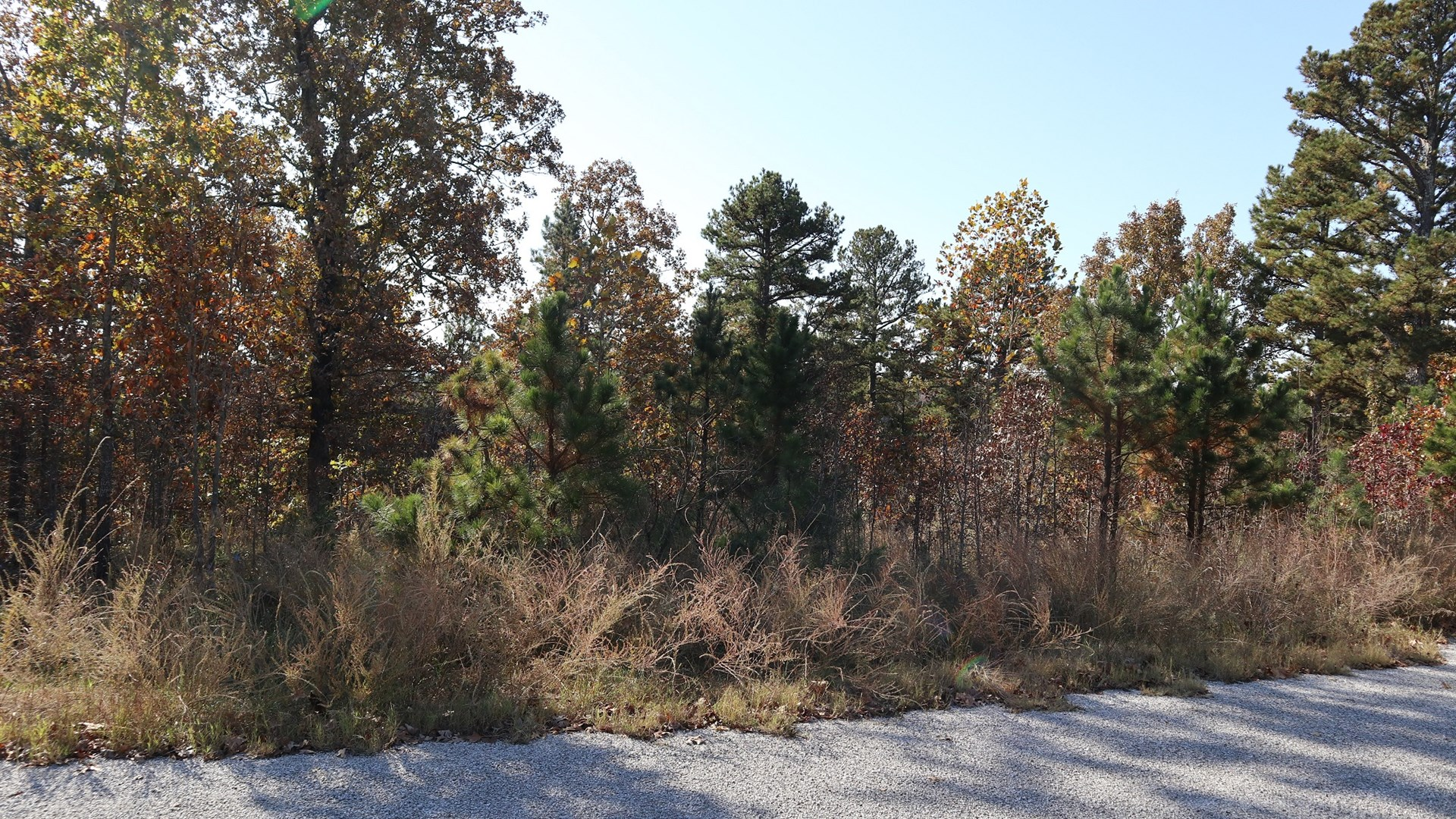 Wooded Acreage for Sale Near Lake Norfork