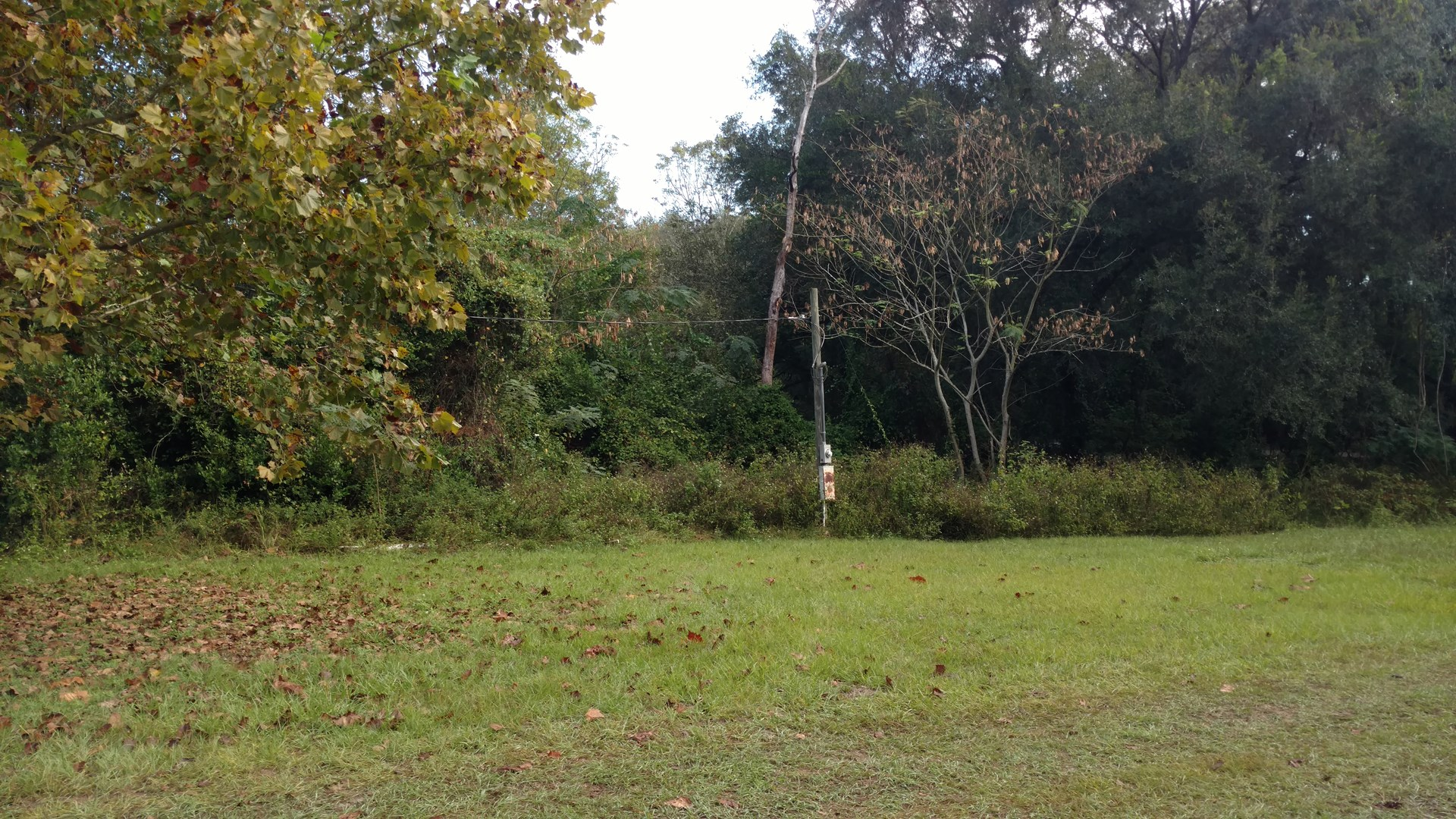 A LITTLE OVER 8 ACRES FOR SALE IN LAKE CITY, FL!