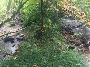 Dark Ridge Creek - 120 Acres with 2500 Ft of Trout Stream