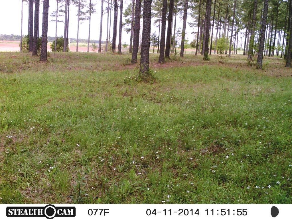 Land For Sale in Henry County Alabama