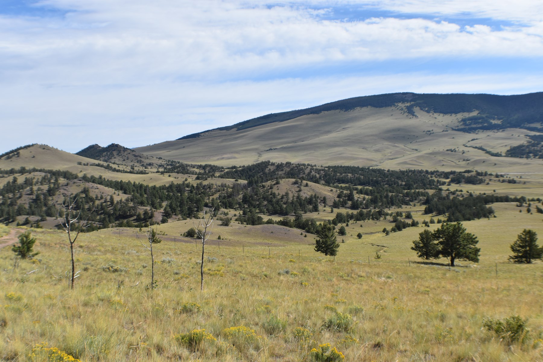 Colorado Mountain Land for Sale Ranch and Hunting Land