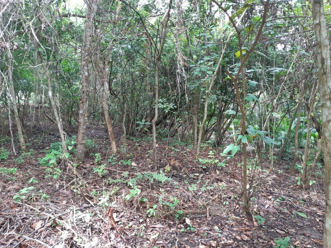 Country farm for sale Panama Real Estate