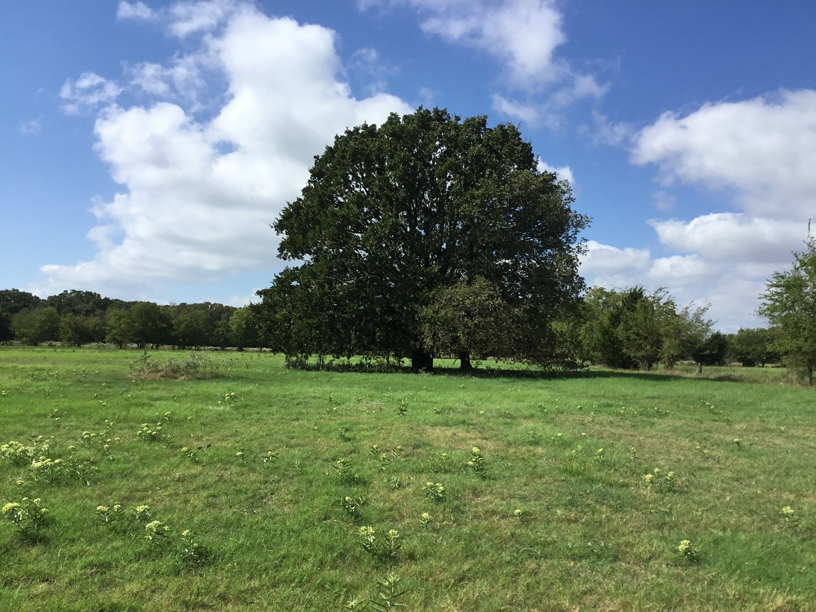 Just Listed 123 +/- AC Land
