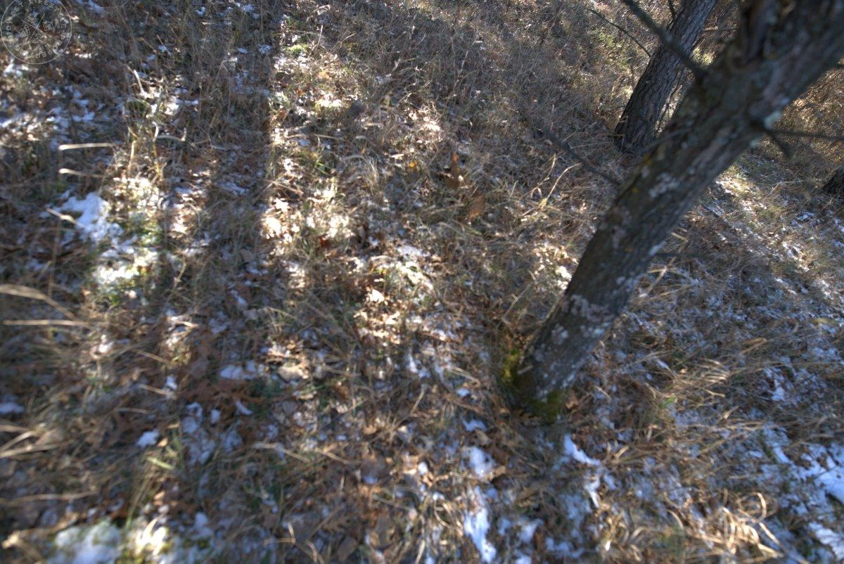 Beautifully Affordable 40-Acre Hunting Land in Portage Count