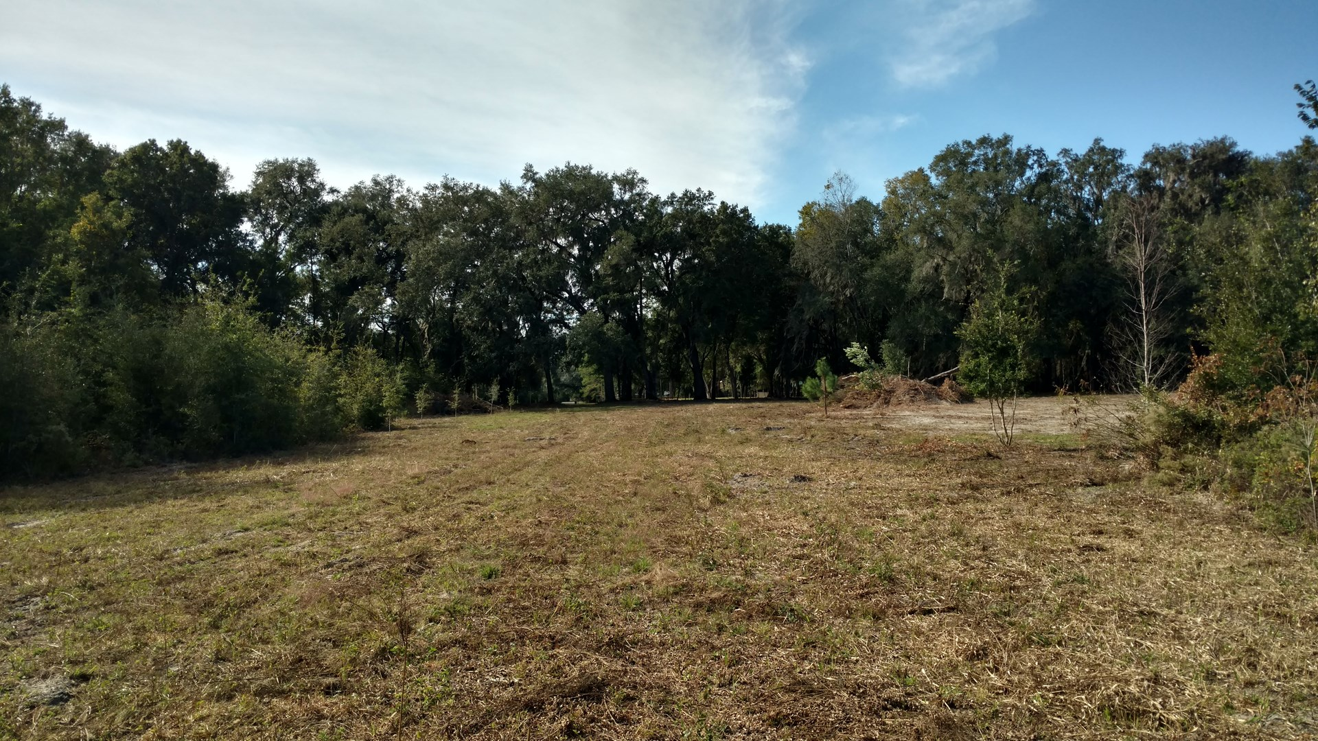 39.21 ACRES FOR SALE IN LAKE CITY, FL!