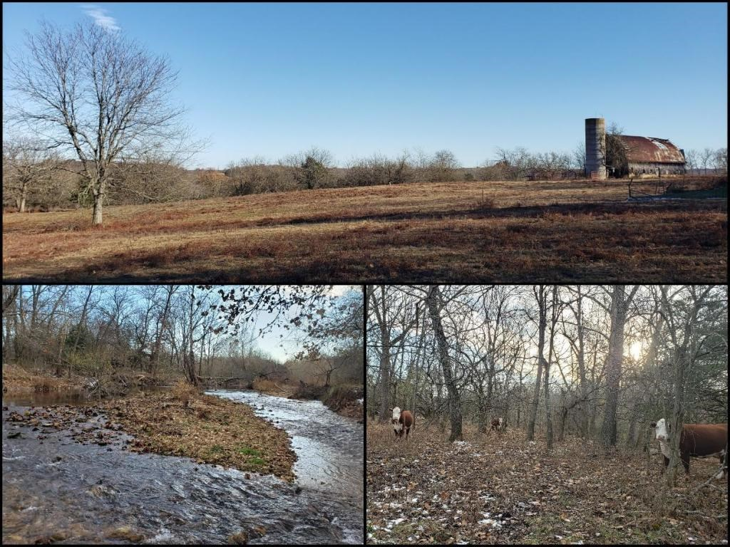 Ozarks Acreage with Year-Round Creeks near Springfield, MO