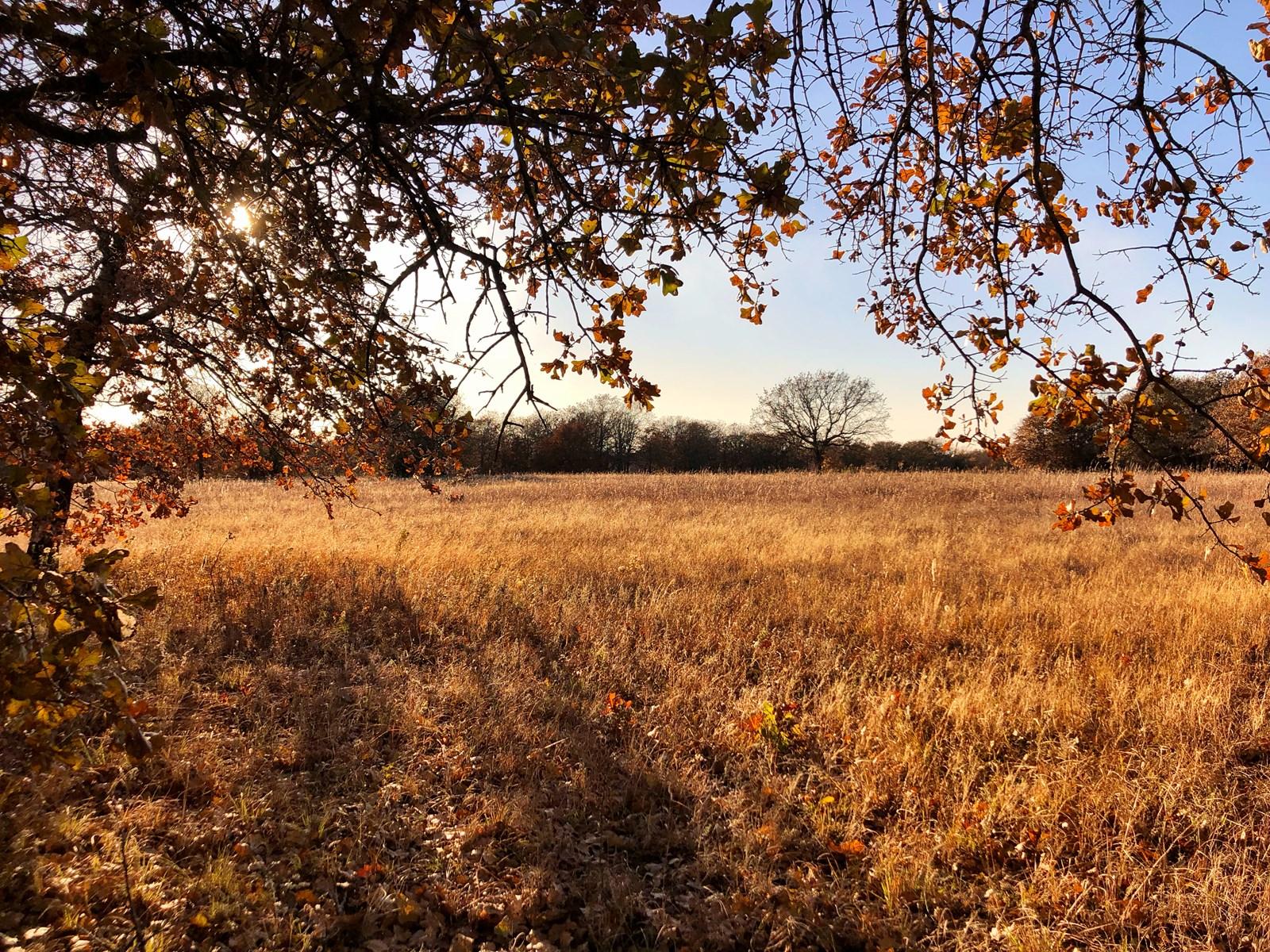 HUNTER'S DELIGHT- LAND FOR SALE IN HEALDTON, OK