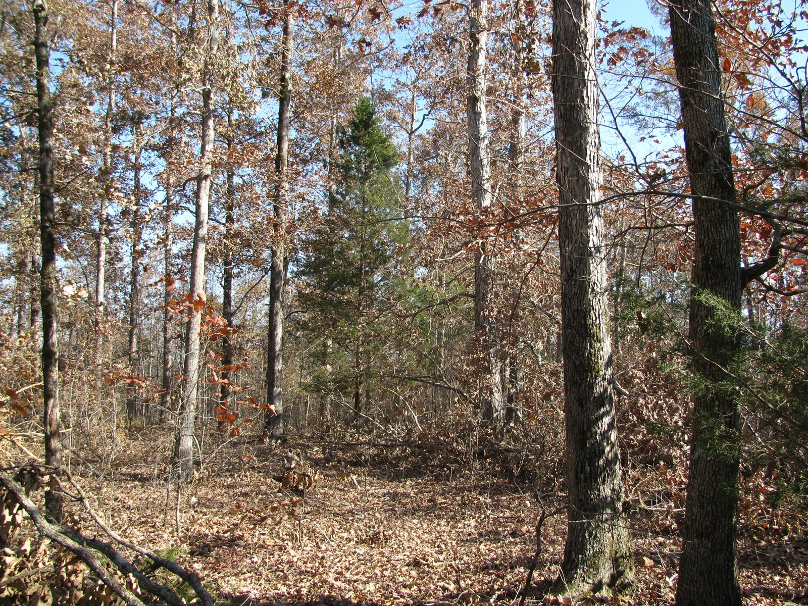 LAND FOR SALE IN TENNESSEE, DEER HUNTING LAND, WOODED