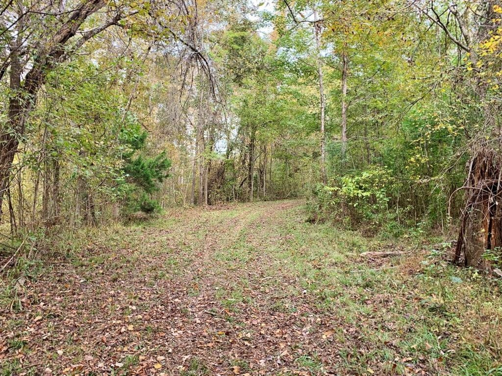 70 Acre Hardwood Hunting Land for Sale Woodville, MS