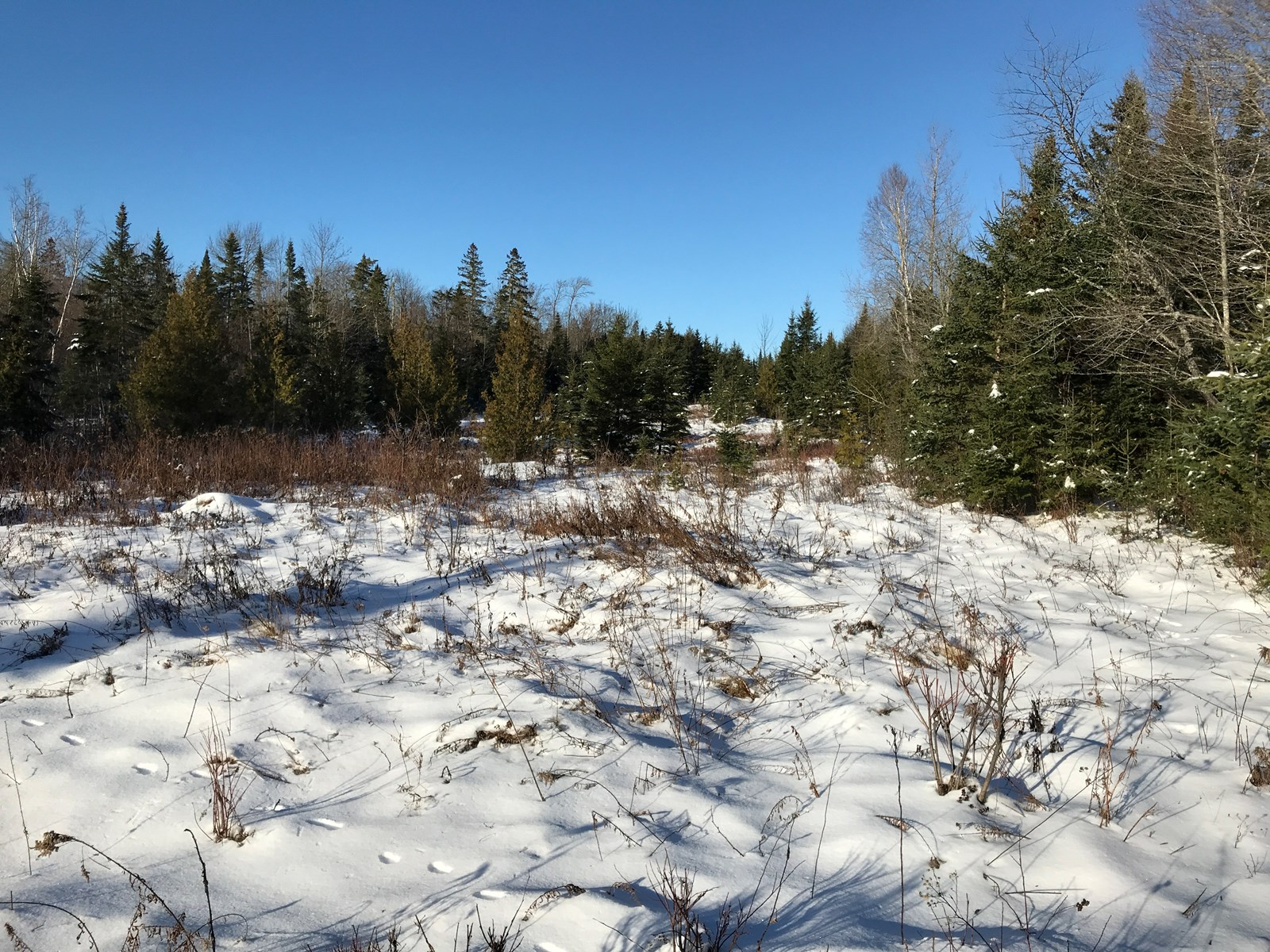 Recreational Land Lot For Sale in Aroostook County, Maine