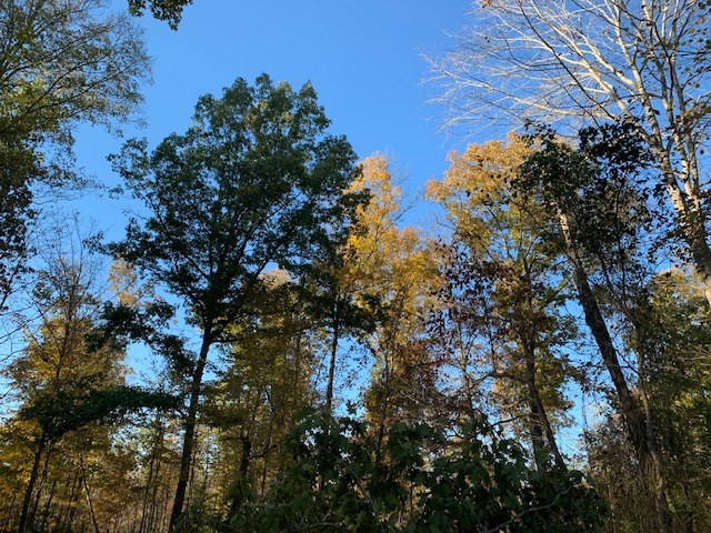 Land For Sale In Middle Tennessee