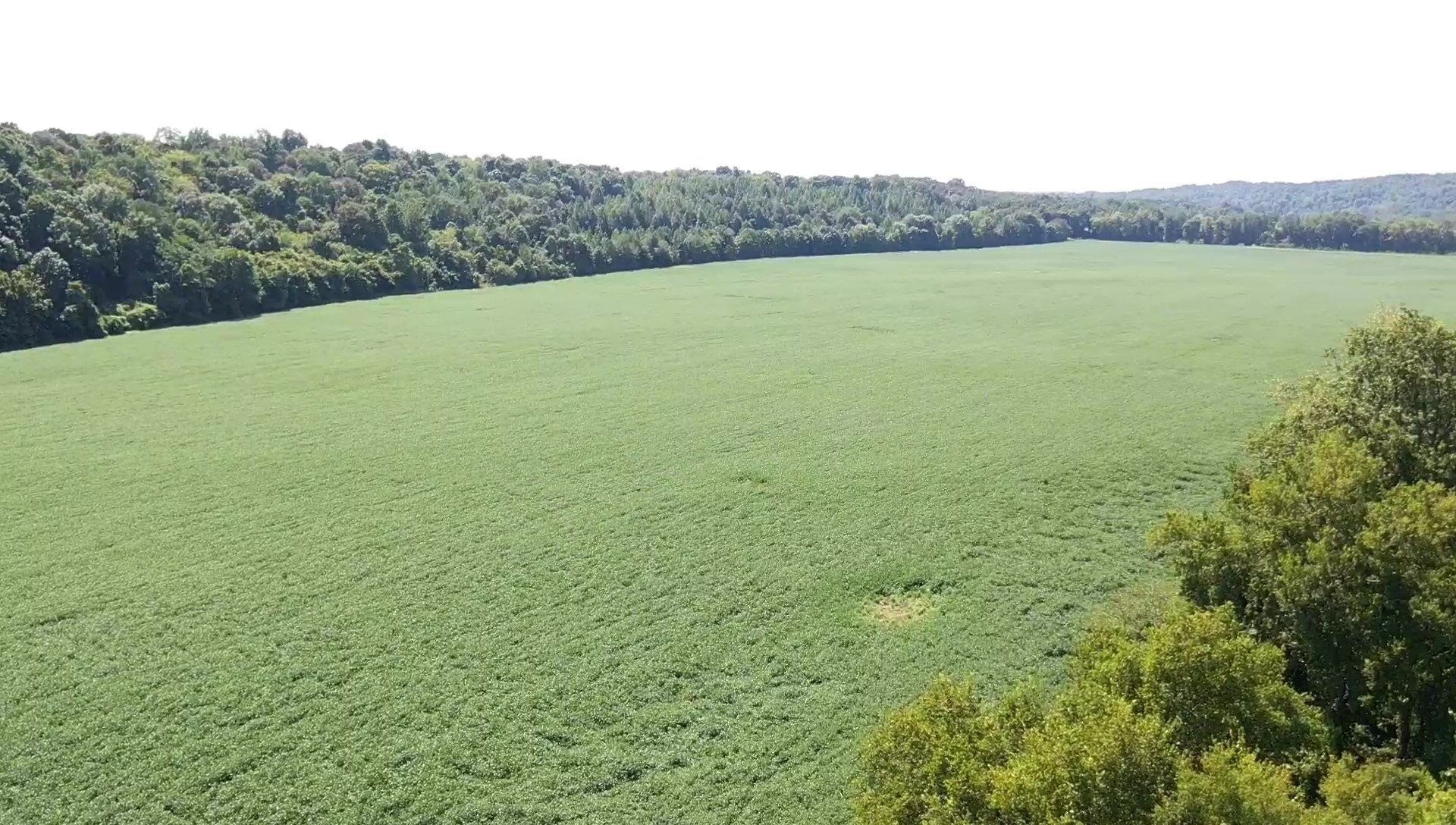 Auction-Court Ordered 98.27 +/-Acres