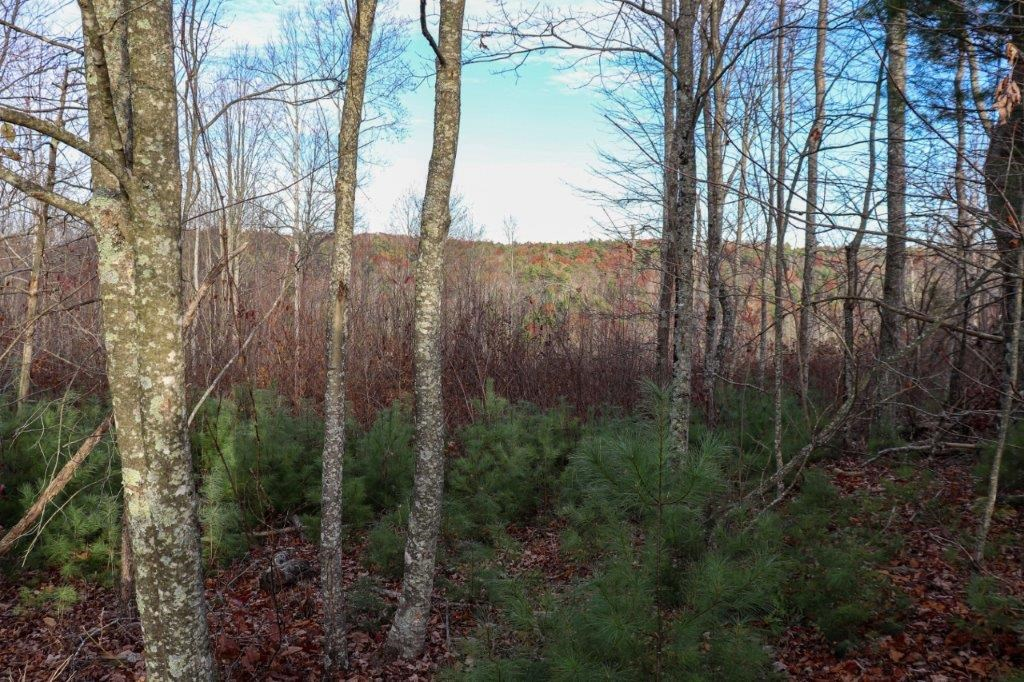 Wooded Land for Sale in Floyd County VA