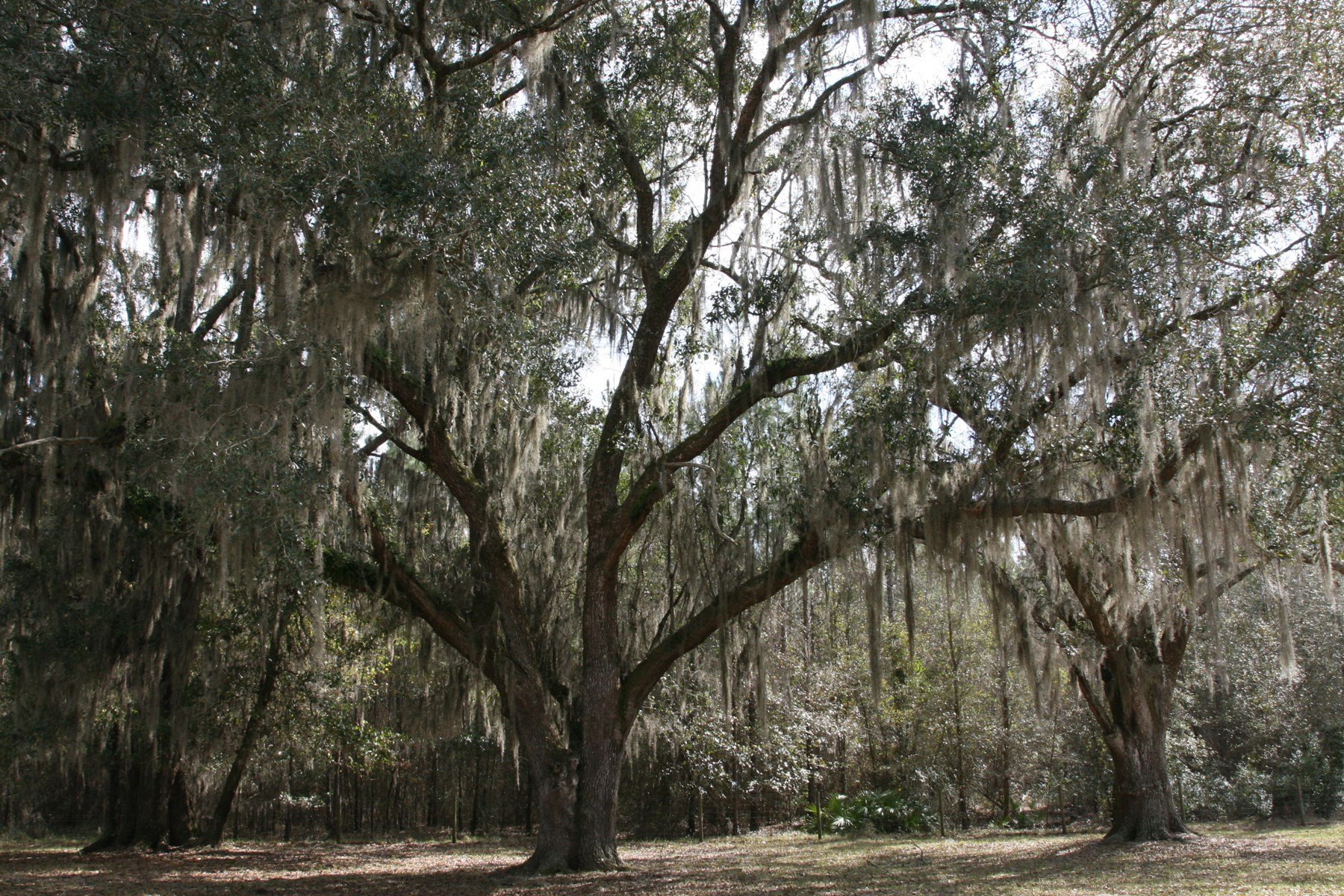North Florida Farm With Airstrip, Lake City FL For Sale