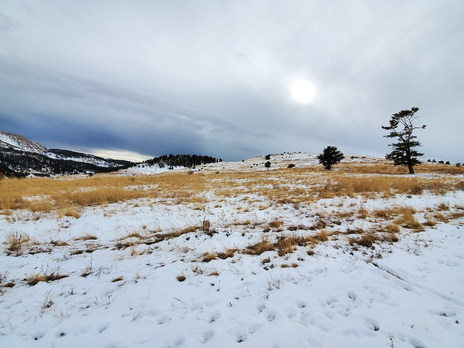 Land for Sale in Cripple Creek near Town