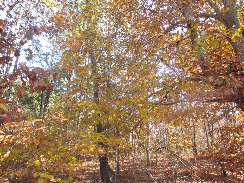 Over 6 Acres In Lunenburg County, VA