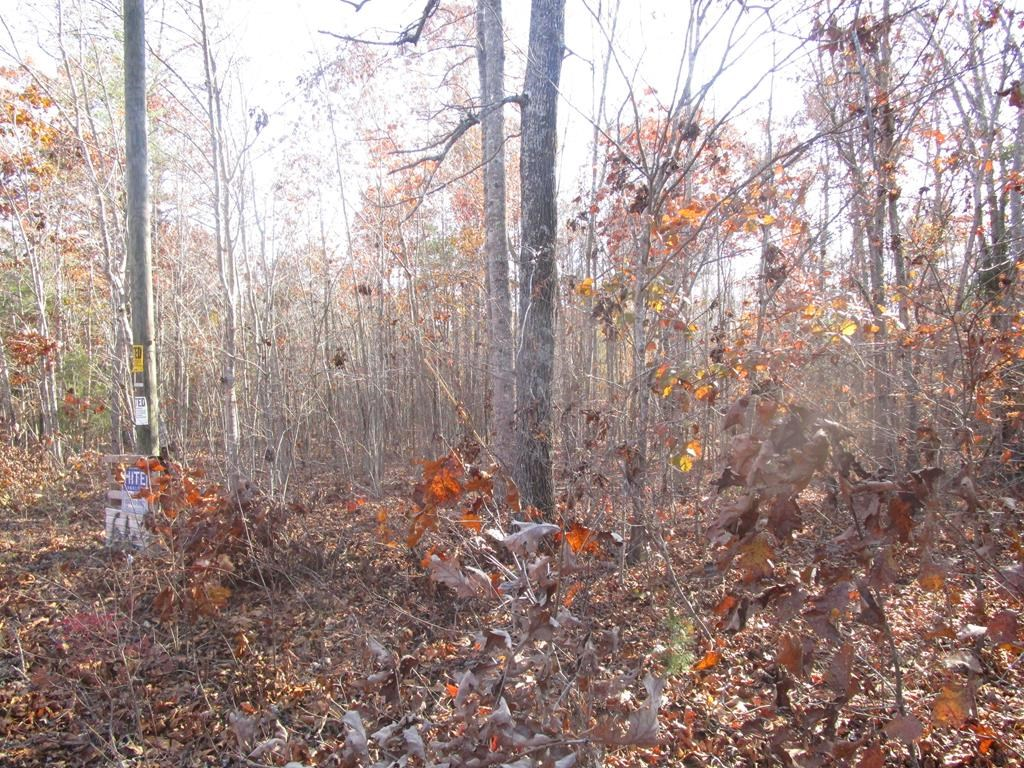 Wooded Tract in Lunenburg County, VA
