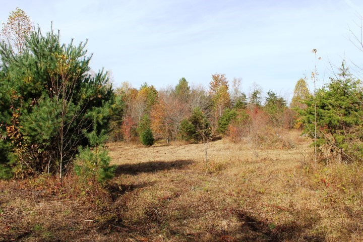 37.92 ACRES OF LAND IN FLOYD COUNTY, VIRGINIA