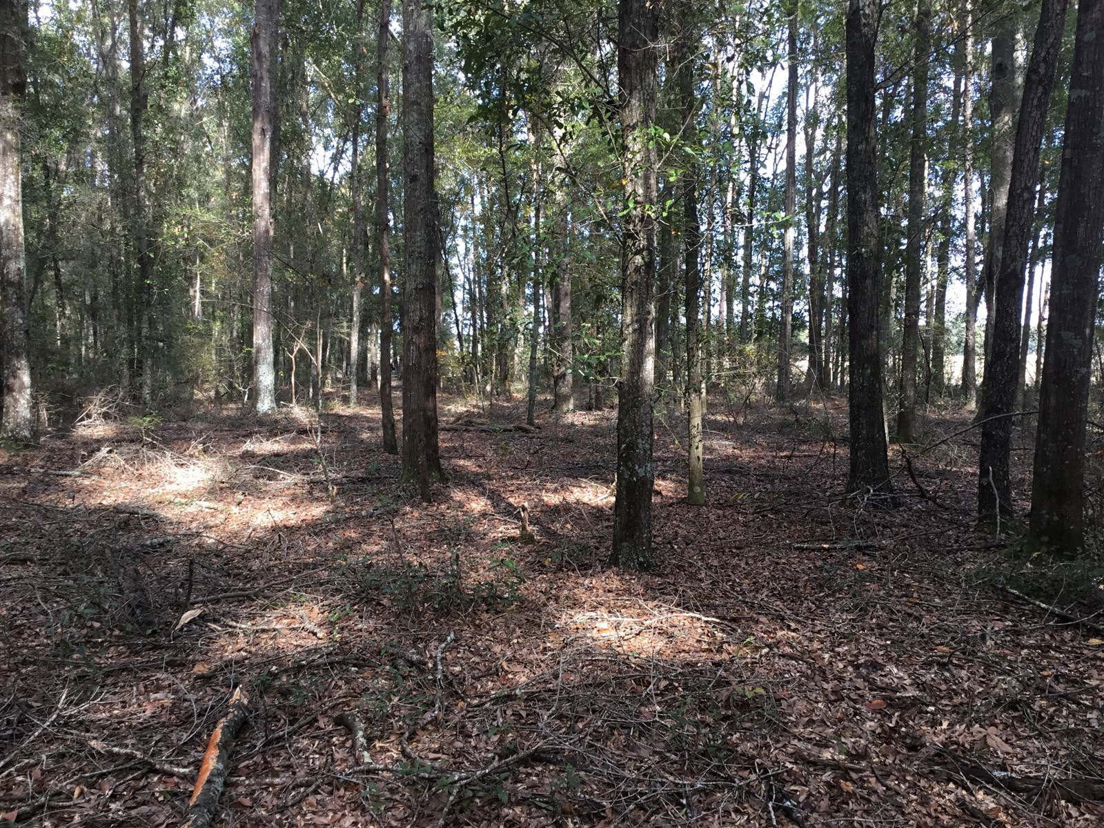 10.08 Acres Suwannee County