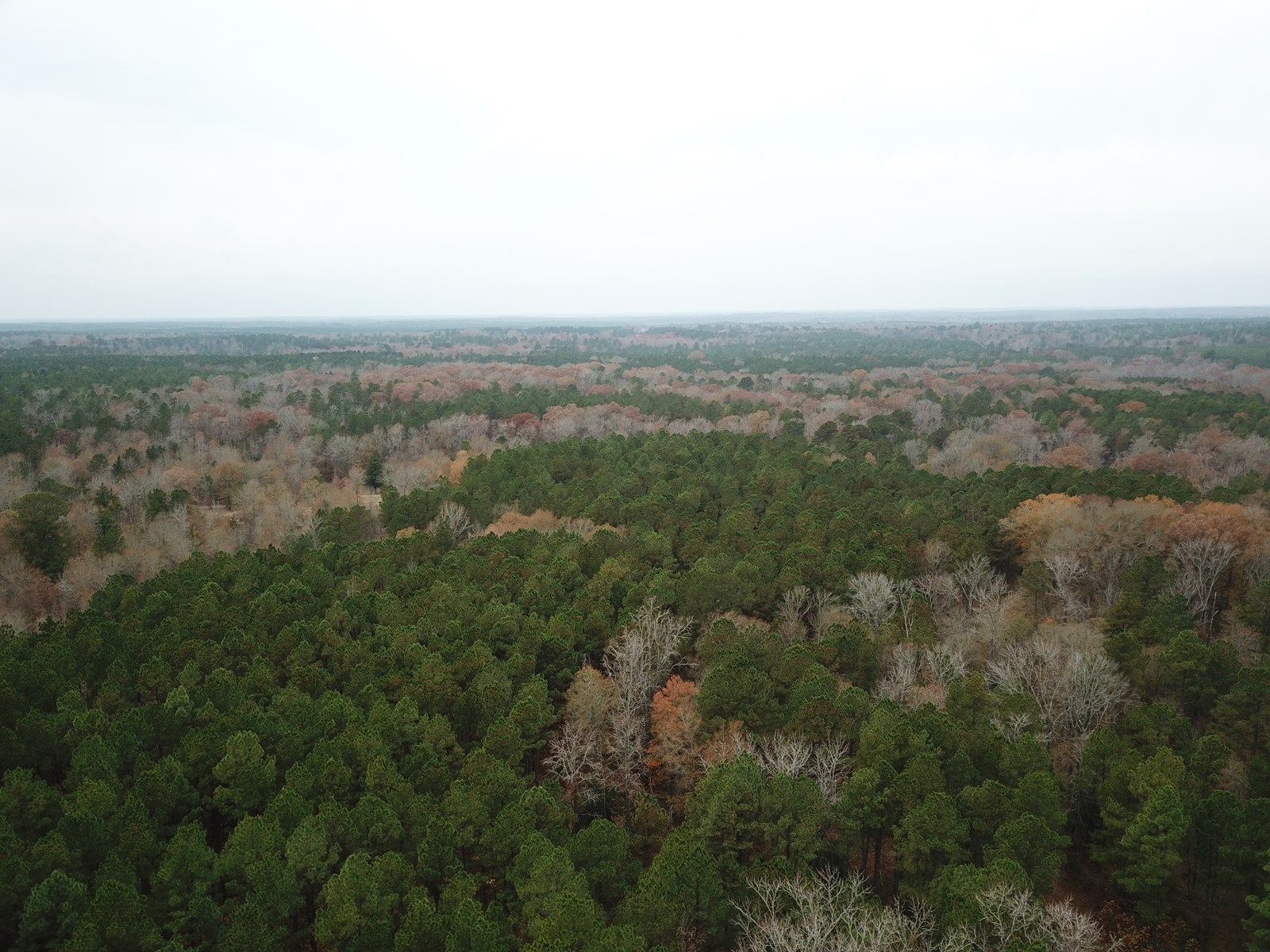 Timberland For Sale by Sealed Bid in East Texas