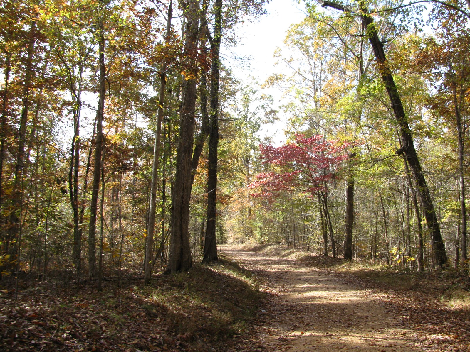LAND FOR SALE IN TENNESSEE, BUILD OR RECREATIONAL