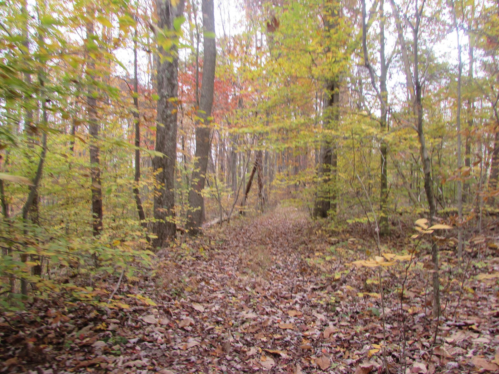 74 Acres of Wooded Land with Opportunity in WV