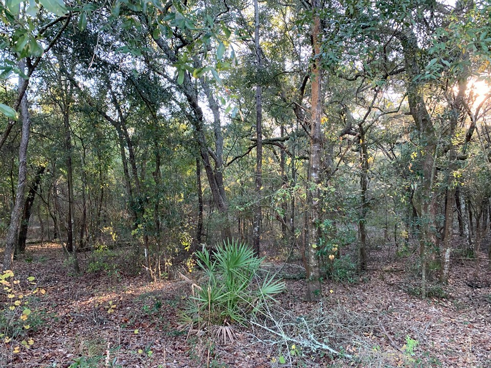 VACANT LAND FOR SALE TRENTON FLORIDA GILCHRIST COUNTY
