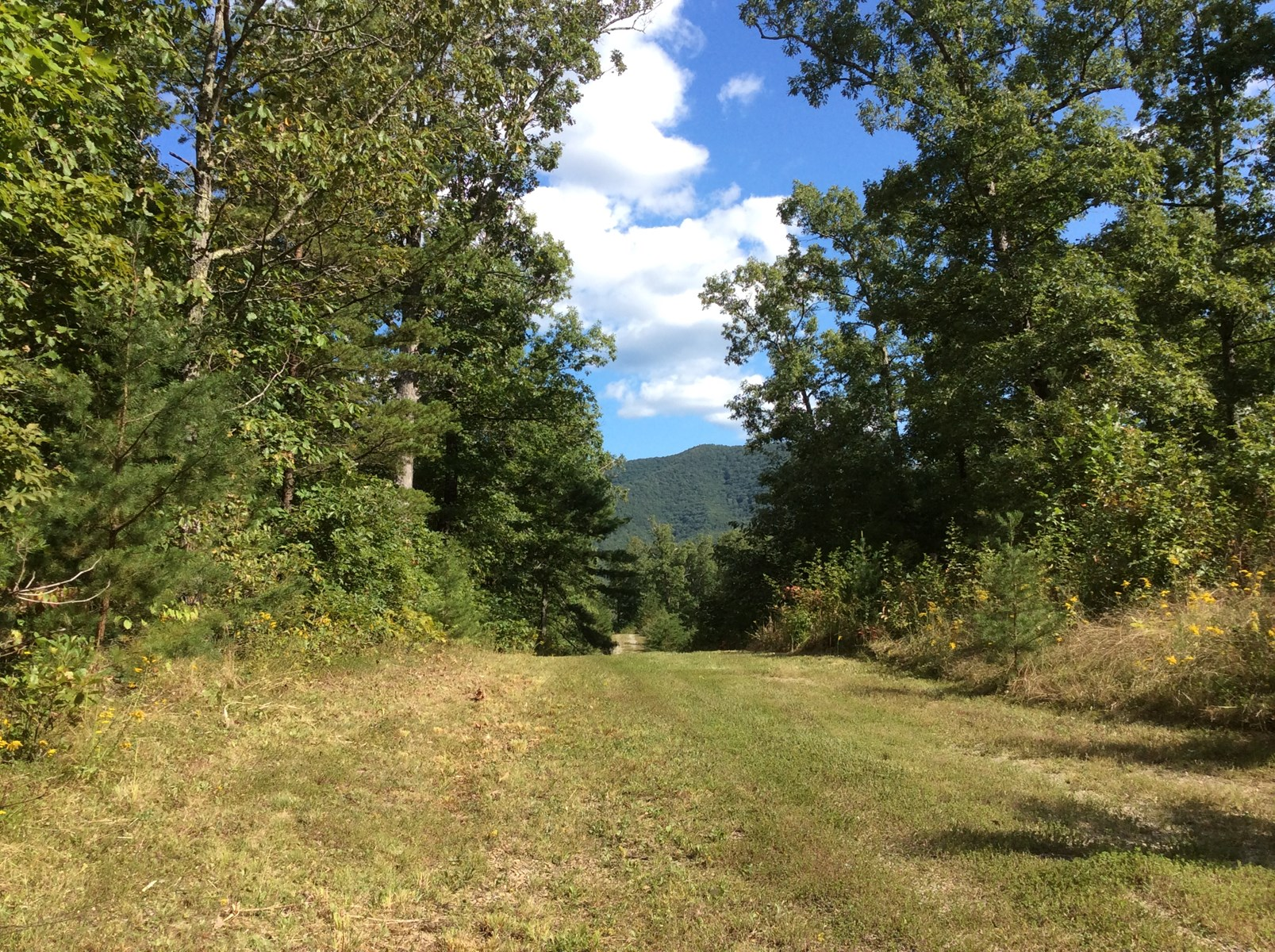Secluded Acreage for Sale in Elliston, VA