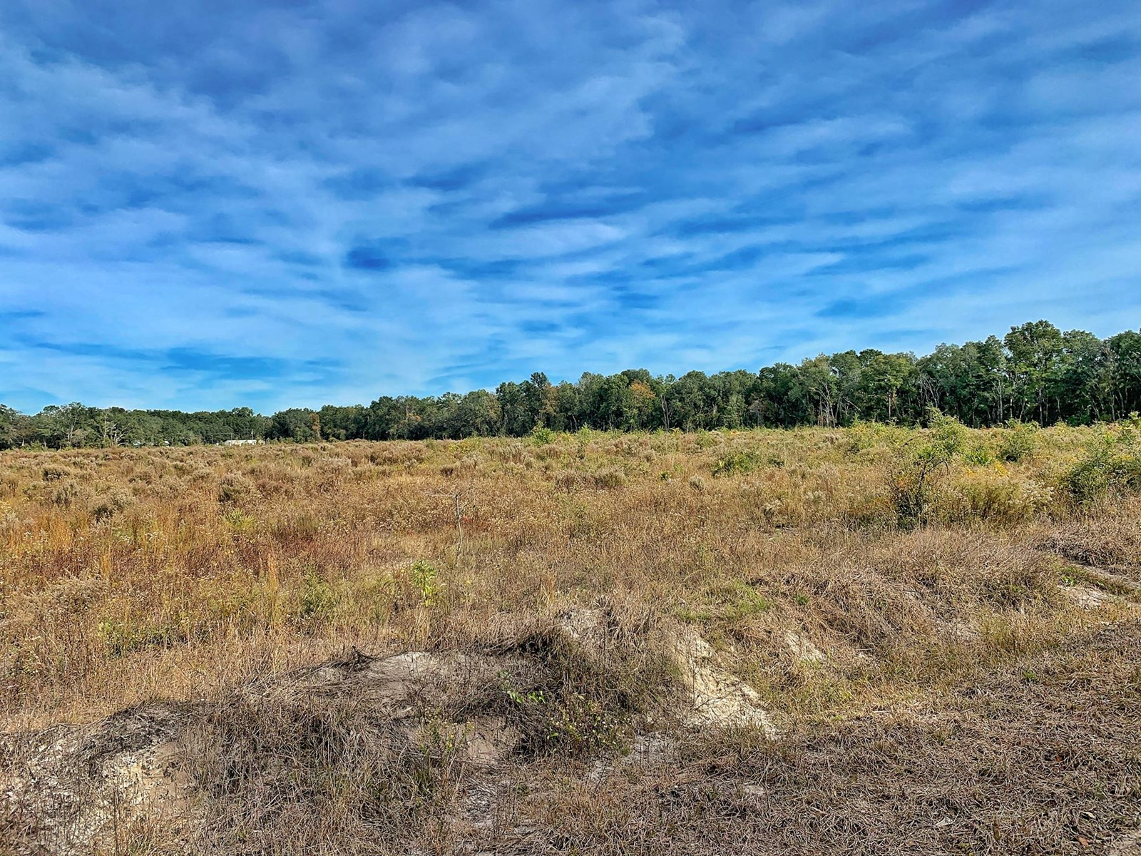 LAND FOR SALE TRENTON CHIEFLAND FLORIDA LEVY COUNTY