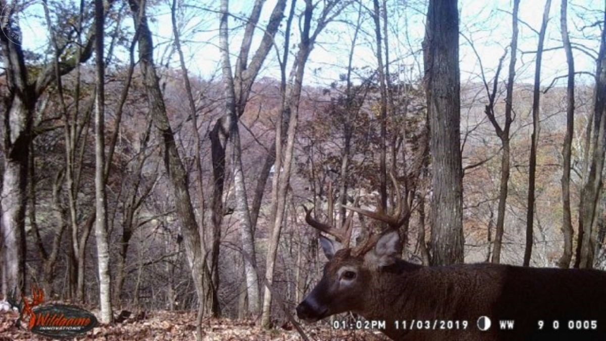 Enticing Hunting Land For Sale in Cazenovia, WI