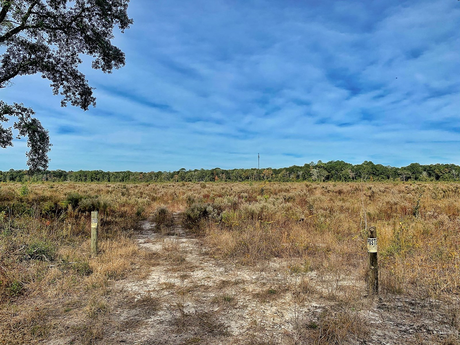 VACANT L:AND FOR SALE TRENTON CHIEFLAND LEVY COUNTY FLORIDA
