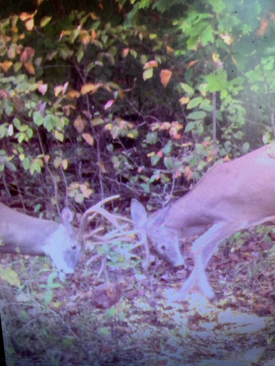 100 ACRES HUNTING LAND-DEER-TURKEY-SECLUDED-HUSTONVILLE, KY.